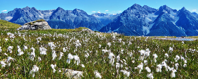 Eriofori - Engiadina Bassa - Grigioni - Svizzera
