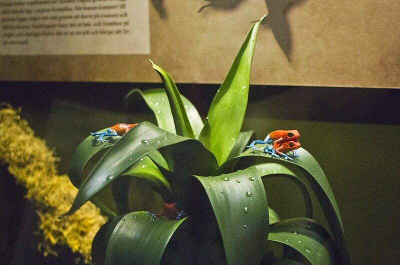 finnish museum of natural history, helsinki natural history museum, helsinki museum natural history, natural history museum, nhm, helsinki nhm, finnish nhm, finland nhm, finnish natural history