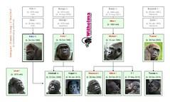 Gorilla Family - Stuttgart 2014