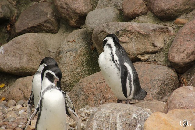 Zoo Rostock 2. Teil 20.08.201664