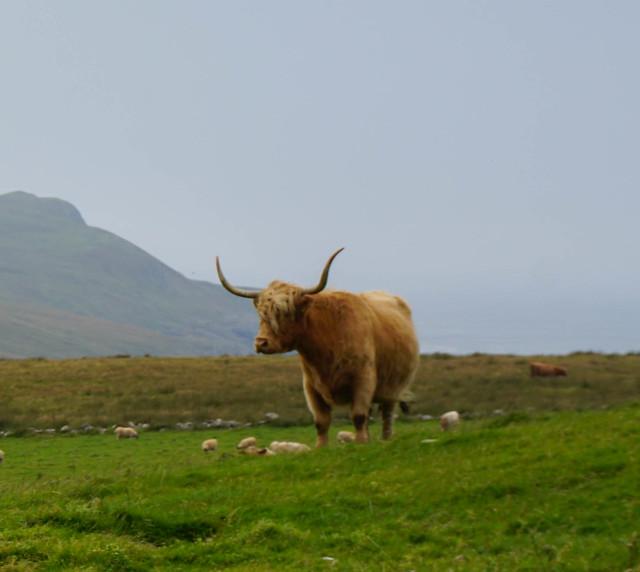 Scotland-28.jpg