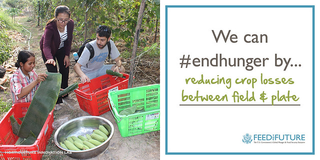 We can #endhunger by reducing crop losses between field and plate