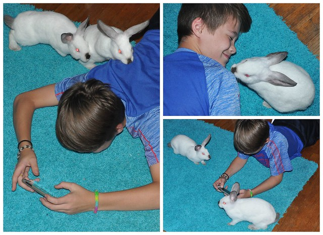 Keeping Rabbits as Pets