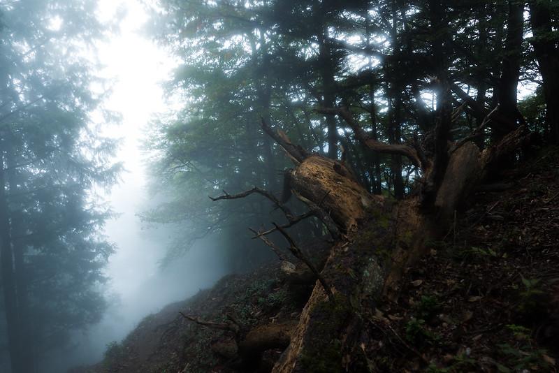 2016年10月 川苔山