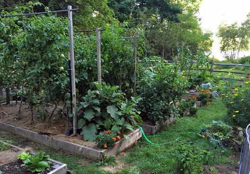my garden IMG_7746b