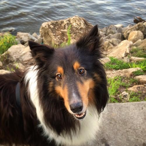 A happy Jasper in Hastings, MN