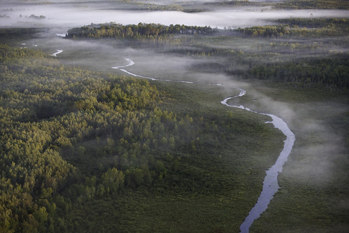Blandin Native American Hardwoods Conservation Project