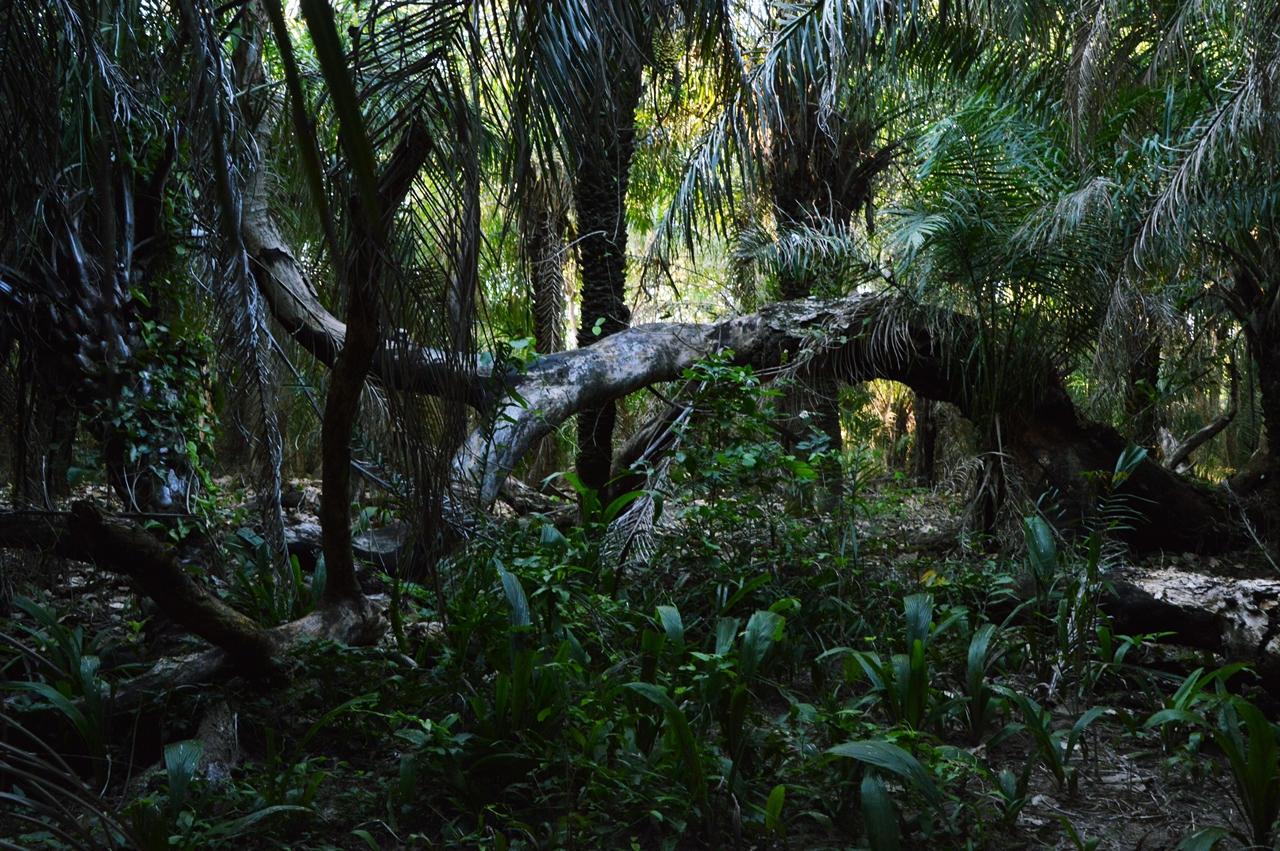 pantanal22