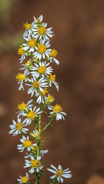 Flower-11-7D2-092116