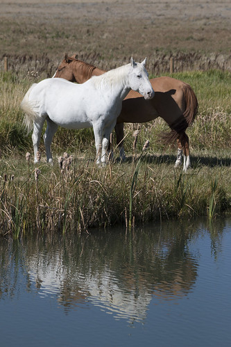 Equine Pair at the Pond (SOTC 214/365)