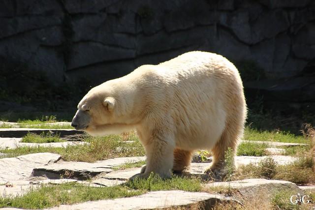 Besuch Tierpark Friedrichsfelde 07.08.16117