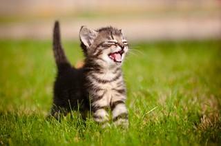 tiny_cat_12573_8950