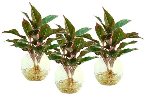 3 loại cây để trên bàn sẽ rước tài lộc đến với chủ nhân