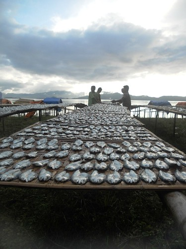 Mackerel, Barangay Barton, San Vicente, Palawan, Philippines. Photo by Mary Aileen M delas Alas, 2011.