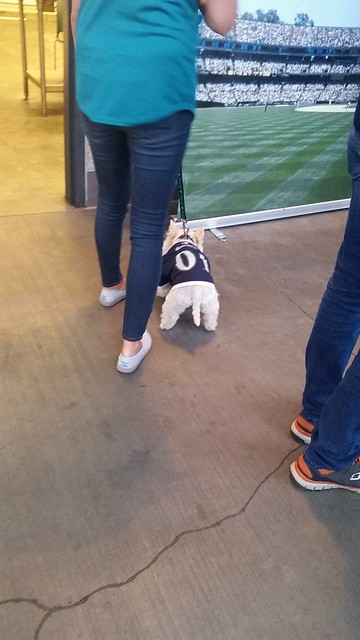 Bark at the Park Westie spotting