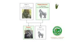 Gorilla Family - Guadalajara