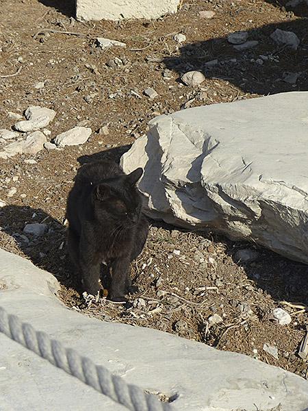 chat noir au Parthénon