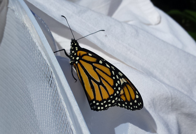 butterfly sitting on the top of a white mesh laundry hamper