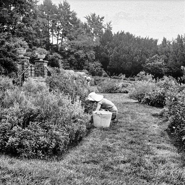 Morris Arboretum_013