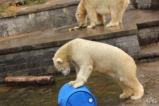 Zoo Rostock 02.10.201629