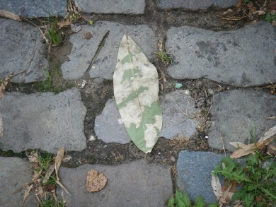 camouflageBlatt