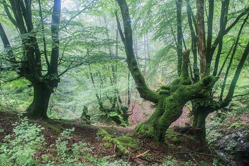 Parque Natural de #Gorbeia #DePaseoConLarri #Flickr - -867