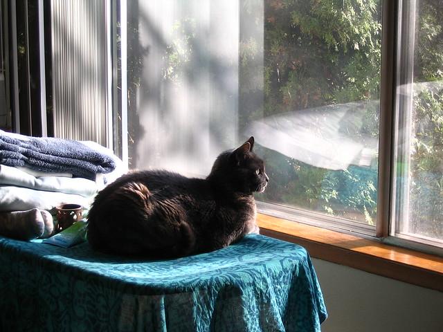 Window gazing - Ceili afternoon