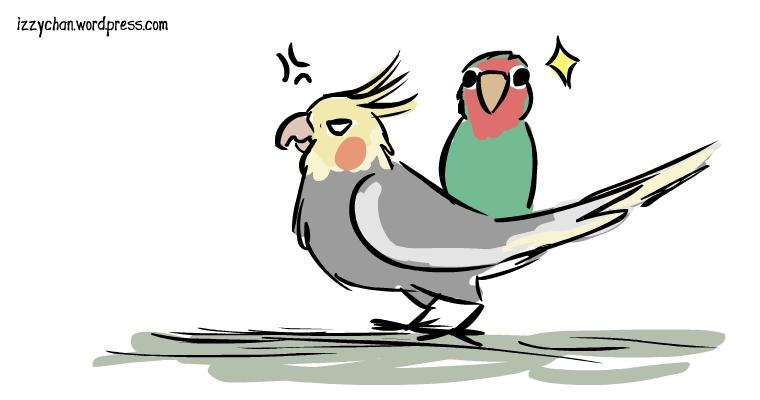 lovebird cockatiel parrot