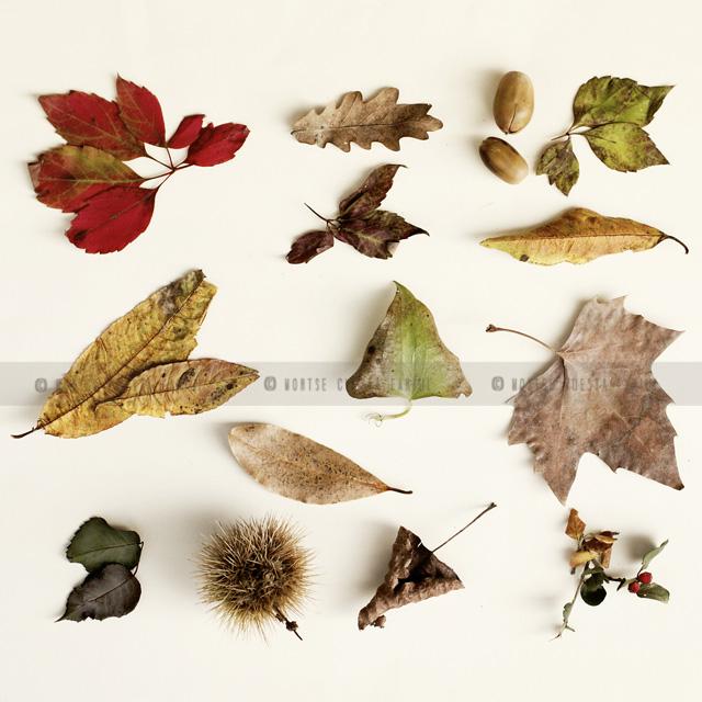 otoño y sus colores