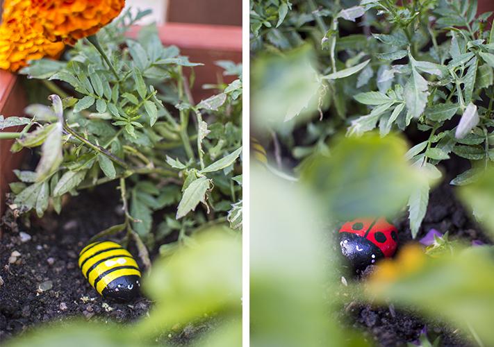 ladybird_bee_stone