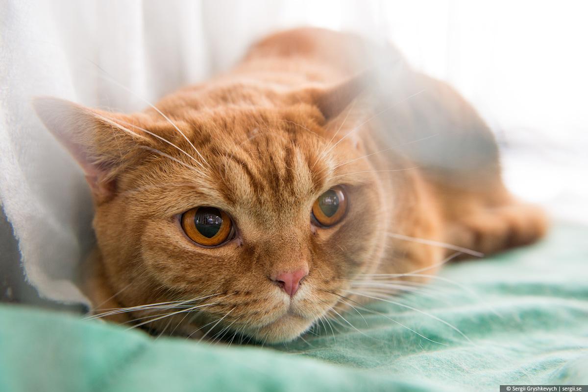 cat_ultra-4