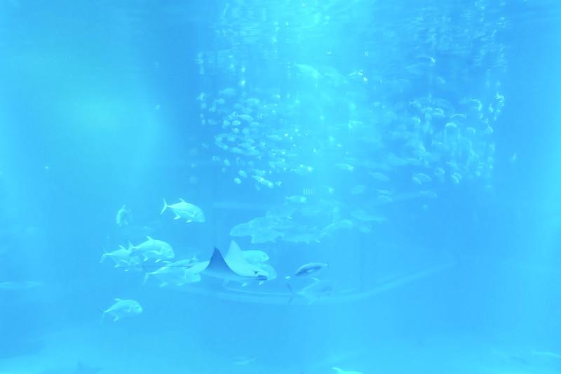 osaka aquarium/kaiyukan