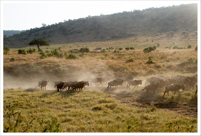 MasaiMara-116