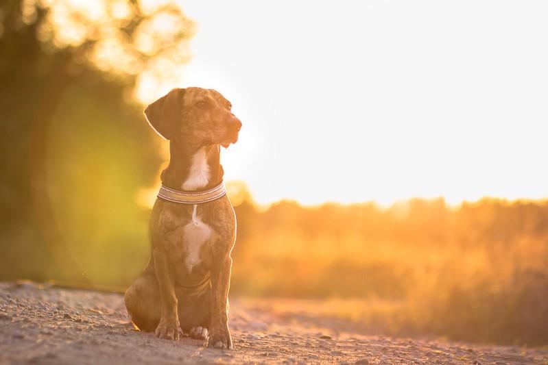 koirablogi