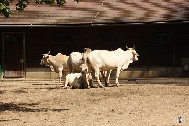 Besuch Tierpark Friedrichsfelde 07.08.1692