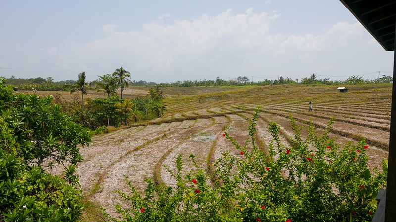 28121774891 ffac8476d5 c - REVIEW - Villa Bulung Daya, Tabanan (Bali)