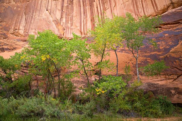 Trees & Sandstone