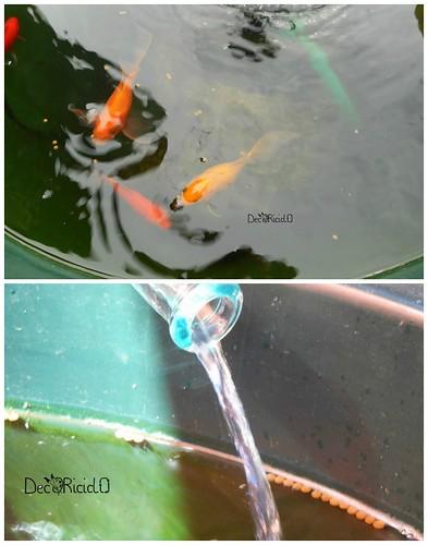 6. alimentazione pesci