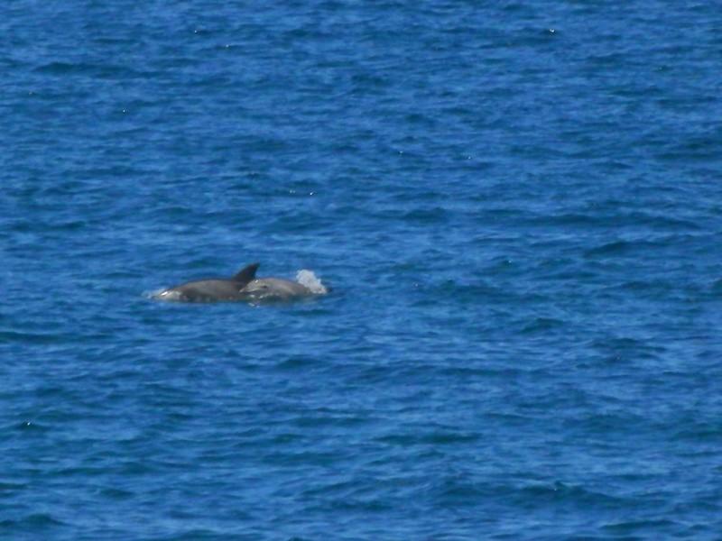 Dos delfines un momento