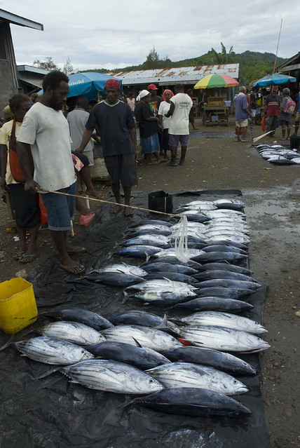 Freshly caught bonito, Auki Market, Solomon Islands. Photo by Eran Brokovich.