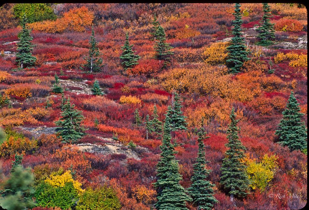 Alaska Tundra Color in the Fall