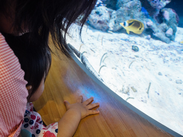 160730_Aquarium-12
