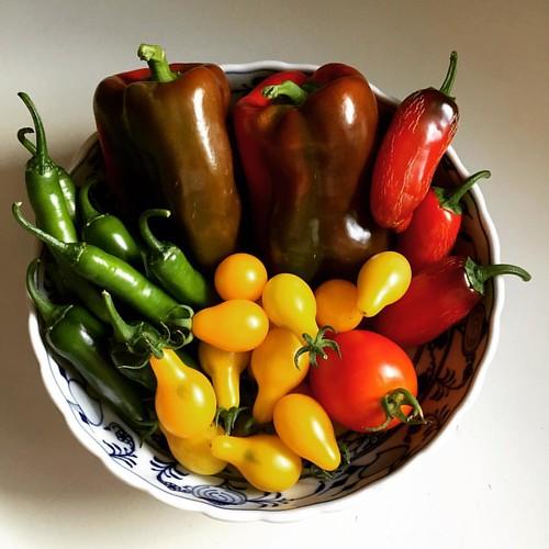 garden harvest #grewitmyself