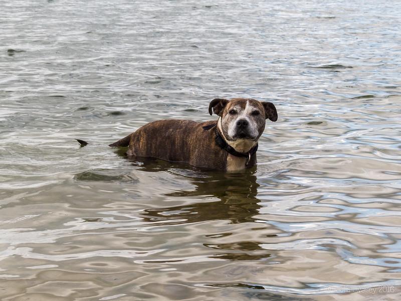 Jez in the sea