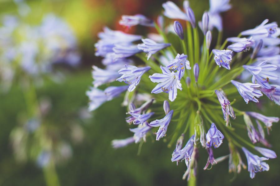 Flowers, Odaiba