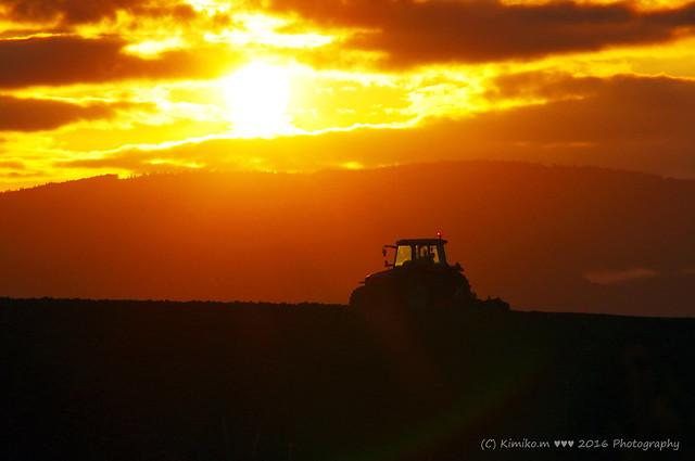 夕陽とトラクター