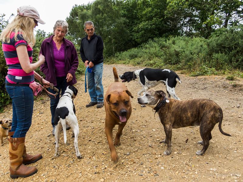 Meeting friends on Upton Heath