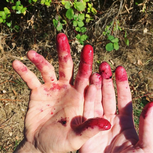 Blackberry-stained fingers at the park today.
