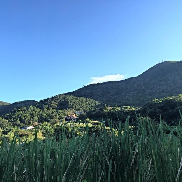 竹子湖 (26)