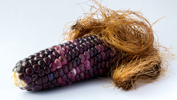 Black corn  shape of a penis